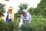 PKK Agropark jadi destinasi wisata keluarga di Lampung