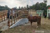 Pemda DIY perkirakan omzet penjualan hewan kurban turun sekitar 50 persen