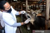 Pekanbaru terbitkan aturan penyembelihan hewan kurban dan salat Ied