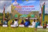 Bupati Siak panen raya di Sabak Auh hasil padinya 6-8 ton per ha