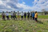 Tingkatkan produksi jagung, Konawe Selatan siapkan 20.000 hektare lahan