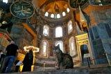 Kisah Gli, si kucing penghuni Hagia Sophia