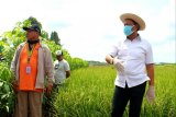 Irjen Kementan minta sejumlah perbaikan di kawasan pertanian Kalteng