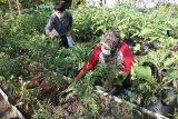 Warga Palangka Raya didorong manfaatkan pekarangan untuk budi daya sayur