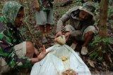 Petani madu hutan banjir pesanan di era pandemi