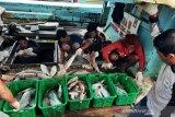 Singapura dan Malaysia buka kembali penjualan ikan dari Kepri