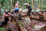 BNF-CIMTROP bangun dam guna cegah kebakaran di Hutan Sebangau