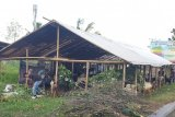 Tim Kesehatan Distan Mataram belum menemukan hewan kurban sakit