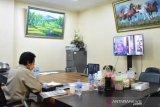 Bangka Belitung terima sapi kurban Presiden Jokowi seberat 1,57 ton