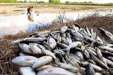 DPRD dorong pemberdayaan nelayan di Seruyan melalui program inovatif