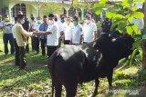 Bupati serahkan tujuh ekor sapi sebagai hewan kurban