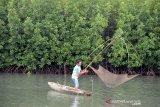 Nelayan menempatkan alat tangkap tradisional keramba jaring apung di lahan tambak kawasan hutan manggrove, Gampong Alue Deah Teungoh, Banda Aceh. Kamis, 29/7/2020. Lahan tambak yang ditumbuhi tanaman manggrove untuk penghijauan kawasan pesisir itu juga berfungsi sebagai lahan tumpang sari tempat berkembangnya udang dan jenis ikan lainnya sebagai sumber perekonomian warga pesisir. Antara Aceh/Ampelsa.