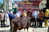 Gubernur  sumbang 20 sapi kurban di Barito Utara