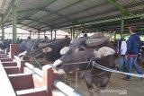 Muhammadiyah Kudus sarankan penyembelihan hewan kurban di RPH