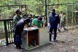 Indonesia menerima repatriasi 91 satwa endemik dari Filipina