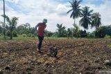 Desa Kampuang Tengah Pariaman anggarkan Rp300 juta untuk kelola lahan tidur dan  kurangi pengangguran