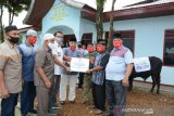 PT Semen Padang bagikan 25 ekor hewan kurban untuk Padang, Dumai dan Aceh