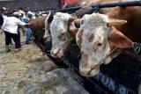 Gugus Tugas DIY: Minimalkan kerumunan saat penyembelihan hewan kurban
