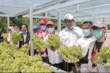 Yayasan CARE dan Dompet Dhuafa bantu petani hidroponik di Sigi