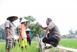 Bupati Musi Banyuasin dialog dengan petani, serap aspirasi