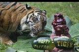Kebun Binatang Bali Zoo rayakan