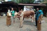 600 KK di Lebong bakal terima daging kurban dari Presiden Jokowi