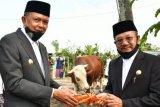 Gubernur Sulsel wakili Presiden Jokowi serahkan sapi kurban di Jeneponto