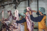 Panitia penyembelihan hewan kurban diminta patuhi protokol COVID