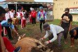 Polres Pariaman bagikan tujuh ekor hewan kurban untuk masyarakat