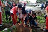 Polres Agam bagikan 500 kantong daging kurban pada masyarakat