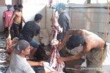 Permintaan pemotongan hewan kurban di RPH Kapuas menurun
