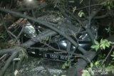 Tiga pengendara terluka karena tertimpa pohon tumbang di Jaktim