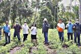 Wali Kota Bitung: Dorong penguatan lumbung pangan berbasis keluarga