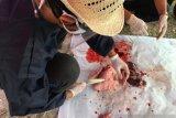 Organ hewan kurban mengandung cacing hati dimusnahkan di Kepulauan Seribu