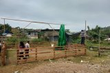 Polresta Jayapura membongkar arena judi sabung ayam
