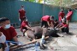 Pertamina bagikan hewan kurban di Sulut