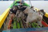 Dompet Dhuafa Sumsel distribusikan  200 hewan kurban