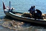 PERMINTAAN HEWAN KURBAN MENURUN. Buruh angkut menurunkan kambing dengan cara dilempar ke laut dari perahu motor di Pelabuhan Kalbut, Mangaran, Situbondo, Jawa Timur, Kamis (30/7/2020). Permintaan hewan kurban berupa sapi dan kambing dari Pulau Sapudi, Kangean, Madura, pada Idul Adha tahun ini hanya 300 ekor sapi dan 200 ekor kambing turun dari tahun lalu yang rata-rata mencapai lebih 1.000 ekor untuk masing-masing jenis. Antara Jatim/Seno/zk