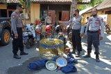 Dua ekor ayam aduan milik penjudi di Sumbawa tertinggal saat kocar kacir digerebek polisi