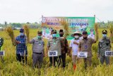 Banyuasin optimalkan puluhan hektare rawa jadi  persawahan