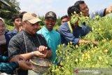 Nilai tukar petani Bangka Belitung naik 2,94 persen