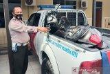 Seorang pengendara di Palangka Raya tewas usai tabrak pohon