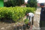 BKSDA Agam bagikan 4.000 bibit tanaman bagi warga sekitar Cagar Alam Maninjau