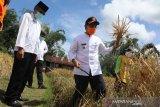 Di tengah pandemi COVID-19, Kabupaten Agam surplus beras sebanyak 14,50 ribu ton