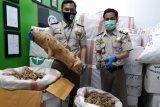 Karantina Pertanian Merauke : 2.659 Kg gaharu dikirim ke Jakarta