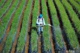 Sertifikat hak atas tanah dapat jadi agunan KUR