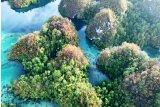 Prof Charlie: Pulau Papua miliki keanekaragaman tumbuhan tertinggi  di dunia