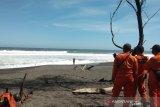 Tim SAR Bantul memfokuskan personel amankan pantai ramai wisatawan