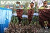 Komoditas bawang putih Napu-Sulteng  menjadi harapan baru Indonesia