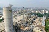 Pusri produksi 2,3 juta ton pupuk, lampaui target 106 persen